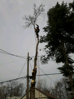 Greg's Tree removal services . Text: 647 648 2453