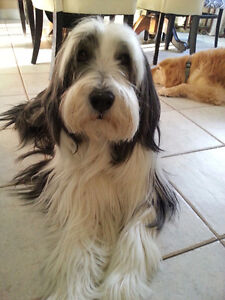 HOME BOARDING - PENSION POUR CHIENS (West Island)