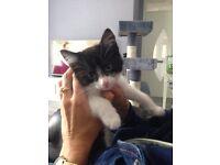 1 kitten left female