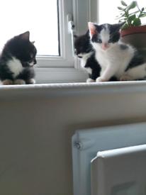 Kittens for sale!!