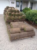 Turf/sod for sale