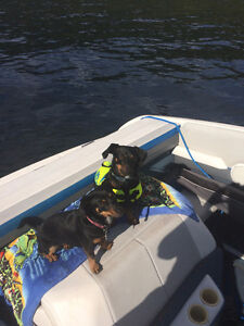 Boat Moorage Wanted  - Mission area