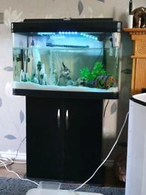 Fish and full tank setup