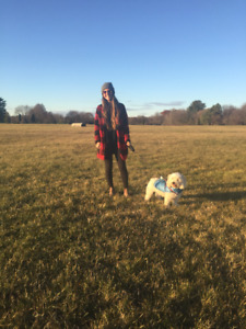 Tails and Bails Dog Walking and Pet Sitting