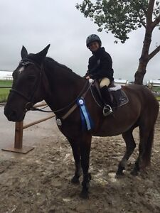 Riding Lessons - School Ponies Available