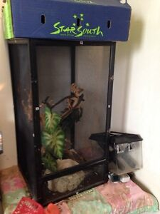 Lizard cage and accessories