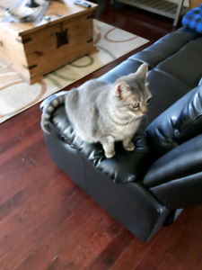 Adult female cat for rehoming