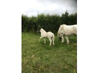 Mare and colt for sale