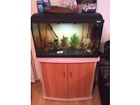 Fish tank and stand, full set up.
