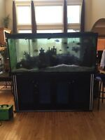 240 gal fish tank with stand