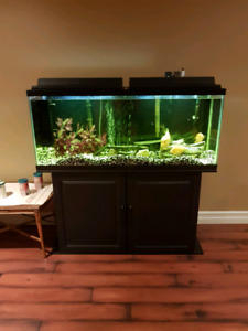 55 Gallon Aquarium with Stand