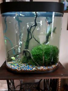 Aquarium 26 gallons avec poisson