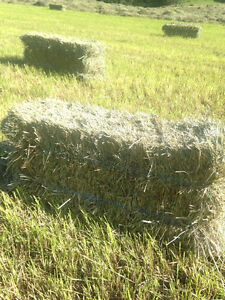 Hay for sale. Fraser lake easy access on highway 16east Prince George British Columbia image 1