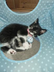 5 kittens left