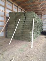 Square grass mix hay bales