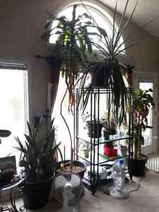 Numerous large tropical and house plants for sale