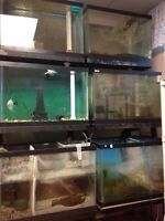 Fish aquarium rack