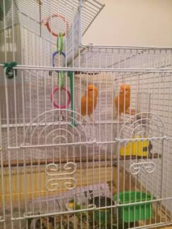 Canaries and cages