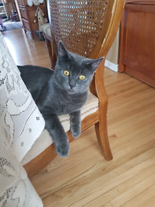 Free 6  month old male cat