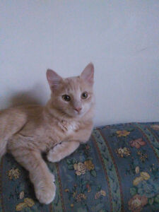 Two 6 month Old female Tabby Kittens