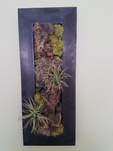 Plantes murales / Suspended wall plants