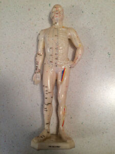 Acupuncture model of body and ear