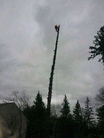 Absolute Tree Removal!