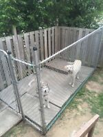 Dog kennel with patio stones