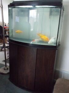 AQUARIUM, STAND AND FISH FOR SALE