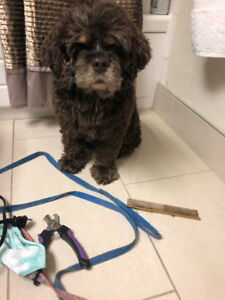 In-Home Dog Grooming