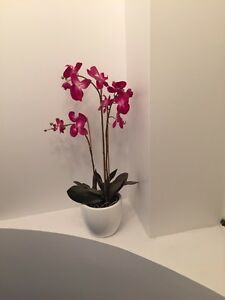Designer large white pot dark pink orchid from home sense