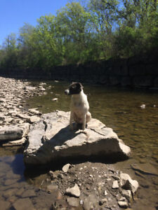 Dog walker Etobicoke