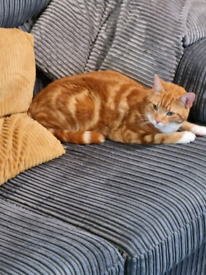 2 loving male cats.loving home needed