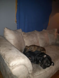 Hoping to find a temp placement for my dogs