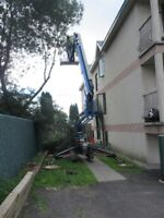 TREE REMOVAL.. NOW Is The TIME TO CALL.. Time Is Running Out!