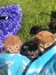 Six Gorgeous Kittens