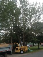 Tree & limb removal, stump grinding, lot clearing