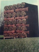 Brockville  fresh sod installation