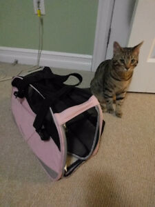 Pink Travel Carrier