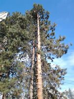 TREE SERVICE Penticton and area