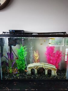 33 Gallon Tank, Light, Heater, Pump with skimmer and Lid