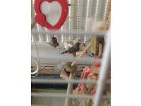Ferplast large birds cage