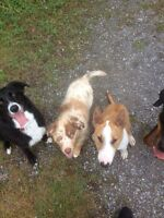 Dog Walker East End - From Orleans to Vanier