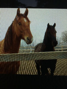 Looking for Riders for Two Horses