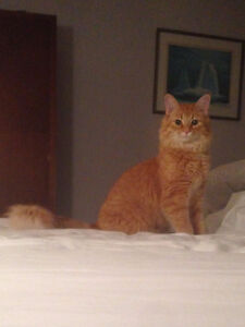 Pistol Pete, still missing and very missed