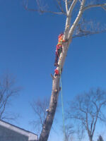 TREE CUTTING - CHEAPEST PRICES IN TOWN