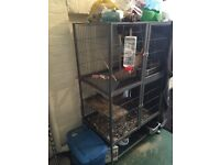 X3 female chinchillas with large cage