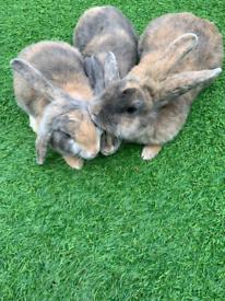 Mum and babys rabbits