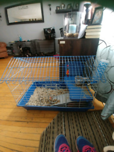 1yr old Guinea pig with bunny cage
