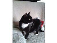 Missing cat in Minster